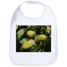 Pedunculate Oak (quercus robur) Acorn - Bib