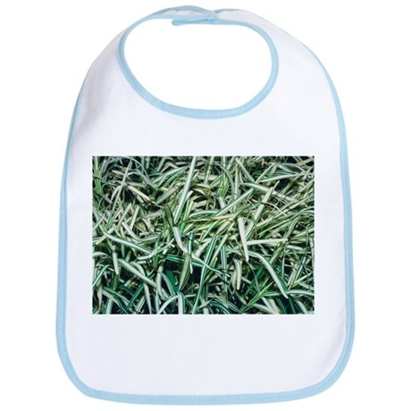 Saint Augustine grass (Stenotaphrum sp.) - Bib