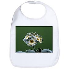 Show auricula 'Monk' flower - Bib