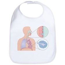 Respiratory tract, artwork - Bib