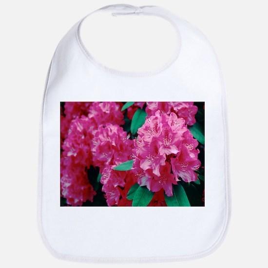 Rhododendron 'Cynthia' - Bib