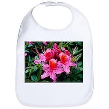 Rhododendron 'Fanny' - Bib