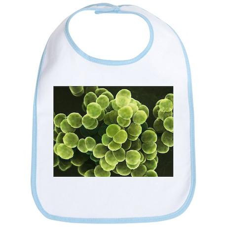Staphylococcus bacteria, SEM - Bib