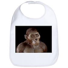 Australopithecus afarensis - Bib