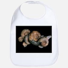 Ammonites - Bib
