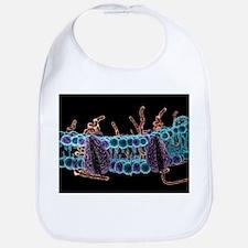 Cell membrane, artwork - Bib