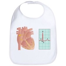 Electrical conduction of the heart - Bib