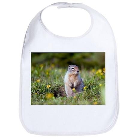 Hoary marmots - Bib