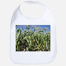 Maize (Zea mays) - Bib