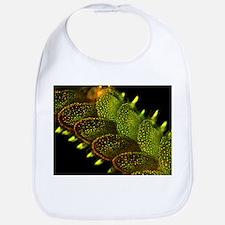 Marine worm fluorescing - Bib