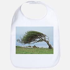 Wind-blown tree - Bib