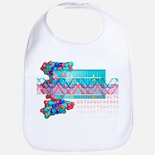 DNA analysis - Bib