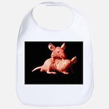 Nude mice used in animal experiments - Bib