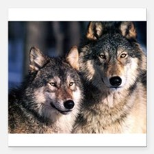 """two wolf Square Car Magnet 3"""" x 3"""""""