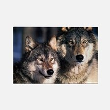 two wolf Rectangle Magnet