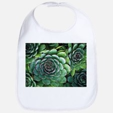 'Hens and chicks' succulents - Bib