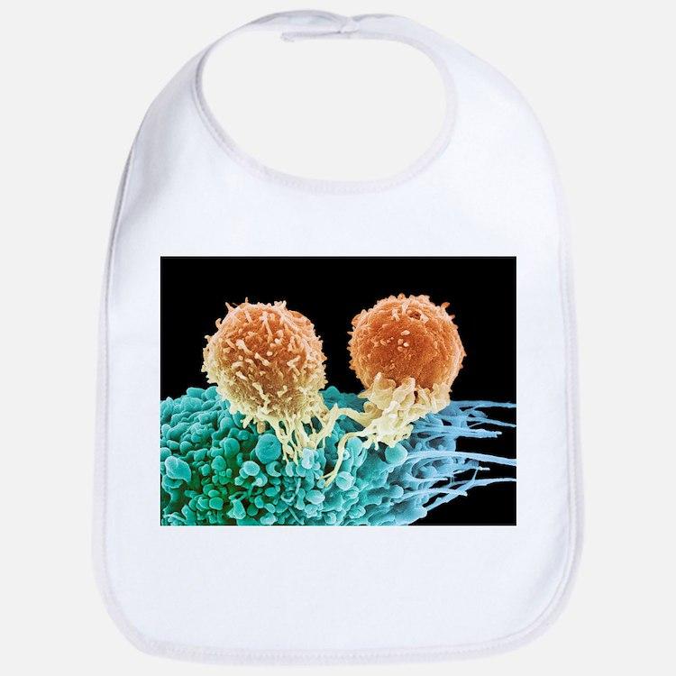 T lymphocytes and cancer cell, SEM - Bib