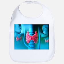 Thyroid gland - Bib