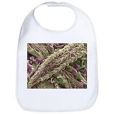 Cannabis plant, SEM - Bib