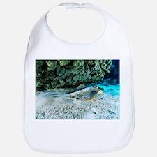 Blue-spotted stingray - Bib