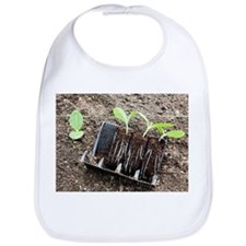 Courgette seedlings - Bib