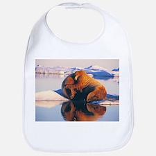 Atlantic walrus - Bib