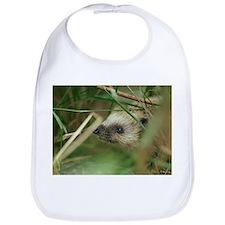 European hedgehog - Bib