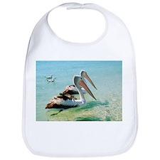 Australian pelicans - Bib