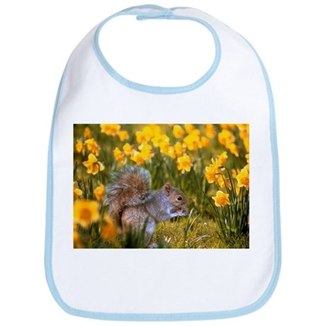 Grey squirrel amongst daffodils eating a nut - Bib