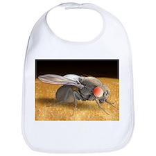 Fruit fly, SEM - Bib