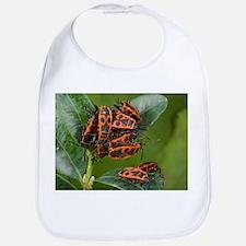 Firebugs mating - Bib