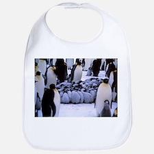 Emperor penguin chicks huddling - Bib