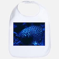 Fluorescing coral - Bib