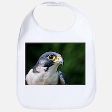 Peregrine falcon - Bib