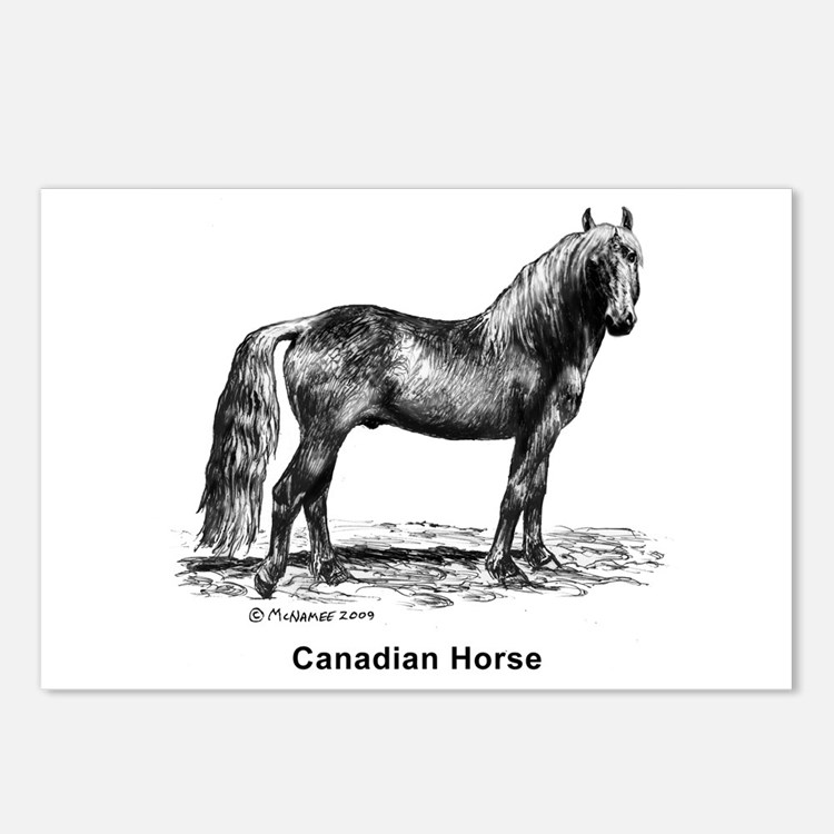 Canadian Horse Postcards (Package of 8)
