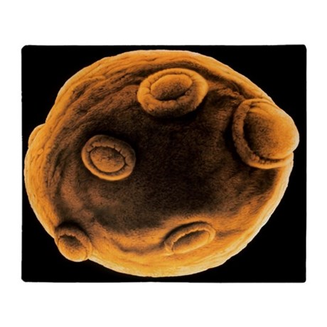 Art of yeast cell budding - Throw Blanket