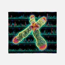 X chromosome, centromere and telomeres - Stadium