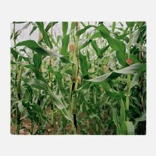 Maize crop - Throw Blanket