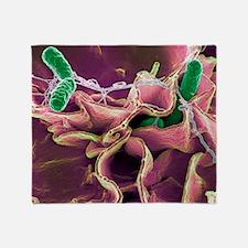 Salmonella bacteria, SEM - Throw Blanket