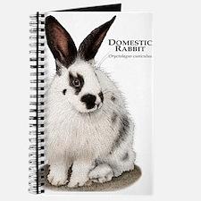 Domestic Rabbit Journal
