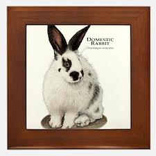 Domestic Rabbit Framed Tile