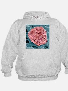 Calcareous phytoplankton, SEM - Hoodie