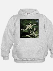 Artemisia flowers - Hoodie