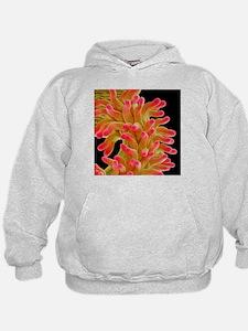 Chickweed flower pistil, SEM - Hoodie