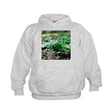 Brussels sprout plant - Hoodie