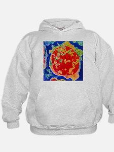 Colour TEM of an erythroblast cell in bone marrow