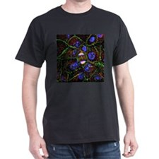 Mitosis, fluorescence micrograph - T-Shirt