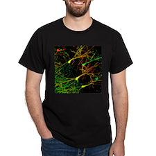 Mouse brain neurons, light micrograph - T-Shirt