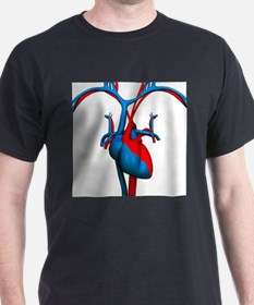 Heart and blood vessels, artwork - T-Shirt