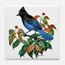 A Blue Stellers Jay in Dogwood Tree Tile Coaster